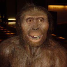 Şempanzelerin İnsana Geçiş Dönemindeki İlk Canlı Türlerinden: Australopithecus