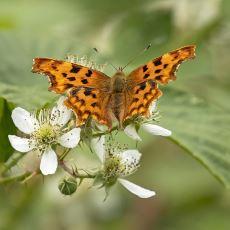 Amazon Ormanları ve Bodele Çöküntüsü Arasında Yaşanan Muhteşem Bir Kelebek Etkisi