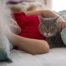 Evde Kedi Besleyenlerin Sayısında Neden Gözle Görülür Bir Artış Var?