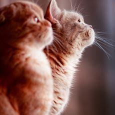 Arkadaşını Veterinerden Kaçırmaya Çalışan Sevimli Kedi