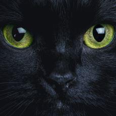 Kara Kedilerin Uğursuzluk Getirdiği İnancı Nereden Geliyor?