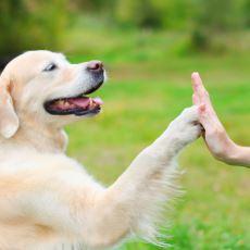 """""""Köpek Nasıl Eğitilir?"""" Diye Merak Edenler İçin Detaylı Bir Köpek Eğitimi Rehberi"""