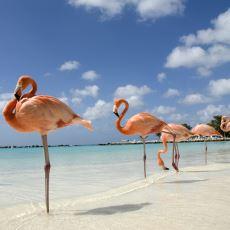 İlginç Bir Kuş Türü Olan Flamingolara Dair Ufukları Açacak Nitelikte Bilgiler