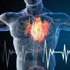 Her Memelinin Yaklaşık 1 Milyar Kalp Atımı Sayısı Kadar Yaşaması