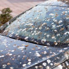 Güvercin Dışkısı Otomobil Boyasına Zarar Veriyor mu?