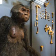 Şempanzeyle İnsan Arasındaki Önemli Bir Ara Tür: Australopithecus Afarensis