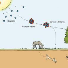 50 Bin Yıldan Genç Olan Fosillerin Yaşını Tespit Etmeye Yarayan Metod: Karbon 14