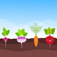 Bitkiler Acı Çekiyor mu?