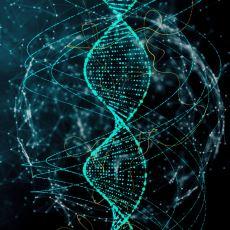 İneklerde, Bezelyede ve İnsanlarda Hemen Hemen Aynı Olan İlginç Histon H4 Geni