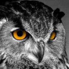 Kuşlar Aleminin Bilgesi: Baykuşların Türk Mitolojisindeki Yeri ve Anlamı