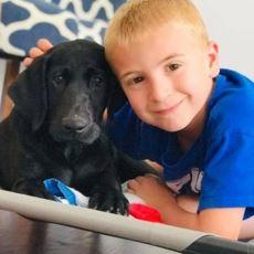 7 Yaşında 1400 Köpek ve 50 Kedi Kurtarmış Bir Kahraman: Roman McConn