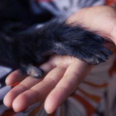 El Parmaklarımız Neden Farklı Boydadır?