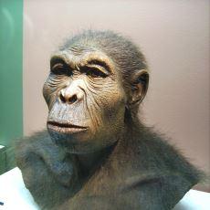 2.5 Milyon Yıl Geçmişten Günümüze: Dünya'da Yaşamış Olan İnsan Türleri