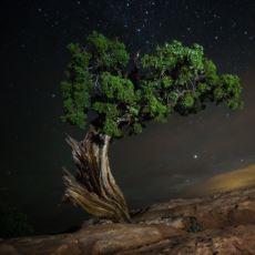 Dünyanın En Yaşlı Ağaçlarının Gece Çekilmiş Mükemmel Fotoğrafları
