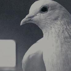 Mr. Nobody Filmi, Neden Güvercin Hurafesini Anlatan Bir Kesit ile Açılıyor?