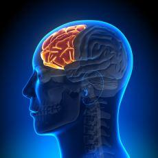 Beynin, İnsanı İnsan Yapan Tarafı: Orkestra Şefi Edasıyla Bizi Yöneten Prefrontal Korteks