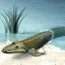 375 Milyon Yıl Önce Dünyadaki Hayatı Sudan Karaya Taşıyan Balık: Tiktaalik Roseae