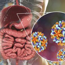 En Sık Görülen Karaciğer Enfeksiyonu: Hepatit B Hakkında Bilinmesi Gerekenler