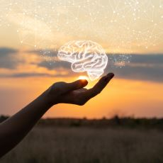 Canlıların Zekasında Belirleyici Kabul Edilen Esas Unsur: Beyin Kitle İndeksi
