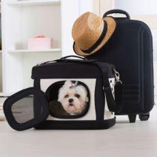 Yurtdışına Köpek Götüreceklere Tavsiyeler