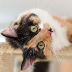 Evinde Kedi Bakmaya Başlayacaklara Tavsiyeler