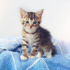 Kedi Öldürenlere Ceza Verirken Hamam Böceği Öldürenlere Neden Bir Şey Demiyoruz?