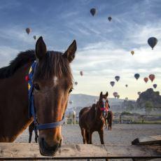 Çayınızı Kahvenizi Alın Gelin: Atın Uygarlık ve Türk Tarihindeki Yeri