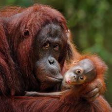 İnsanlar ve Maymunları Karşı Karşıya Getiren, Sürpriz Sonuçlu Fıstık Deneyi