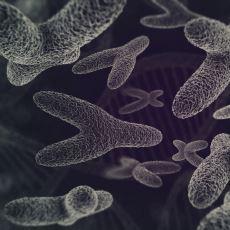 Bugün Yaşayan Tüm İnsanların Baba Soyundan En Yakın Ortak Atası: Y Kromozom Adem'i