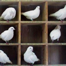 Özellikle Mimarlık Fakültesi Derslerinin Meşhur Örneklerinden 'Güvercin Yuvası Prensibi' Ne İçin Kullanılıyor?