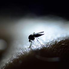 Sıcak Havaların Kanser Edici İlleti Sivrisinek Saldırılarından Kurtulma Taktikleri