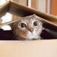 Kedilerin, Minnoşlukları Altında Yatan Birbirinden Garip Davranışları