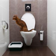 Kedilere Tuvaleti Kullanma Eğitimi Nasıl Verilir?