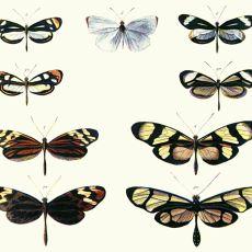 Hayvanların Evriminde İlginç Bir Sonuca Yol Açan Olay: Bates Benzeşmesi