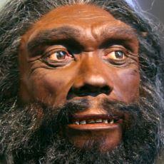 Modern İnsanın Atası Olduğu Düşünülen Tür: Homo Heidelbergensis