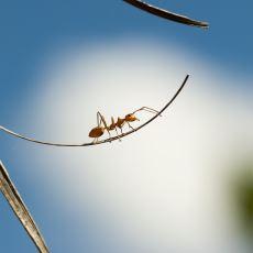 Kafa Karıştırmasına Rağmen Çözülebilen Matematik Problemi: Lastik İp Üzerindeki Karınca