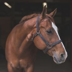 Hisleri İnsanlardan Çok Daha Gelişmiş Canlı: Atlara Dair Bilinmesi Gerekenler