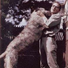 Öldüğünde Bile Köpeğinden Ayrılamayan Amerikalı Öğretmenin Saygı Duyulası Vasiyeti