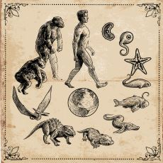 Evrim Teorisi Neden Sıklıkla Yanlış Anlaşılıyor?