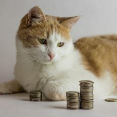 Evde Kedi Beslemenin Aylık Maliyeti