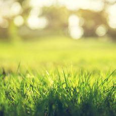 Doğaya Verdiği Zararı Minimuma İndirmek İçin Hafife Alınmaması Gereken Çim Bakımı