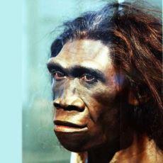 Ateşi Yakmayı Bilinçli Olarak Kullanan İlk İnsan Türü: Homo Erectus
