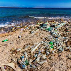 400 Yılda Yok Olan Plastikleri 6 Haftada Yiyen Bakteri Türü