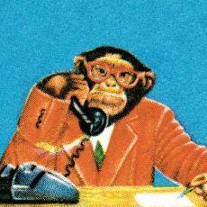 Homo Sapiens'in Konuşma Becerisi, Primat Döneminden İtibaren Nasıl Evrimleşti?