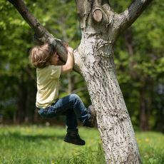 Ağaca Tırmanırken Dikkat Edilmesi Gereken Önemli Hususlar