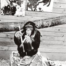 Pierre Brassau Adıyla Sergilenen Resimleri Eleştirmenlerce Çok Beğenilen Şempanze