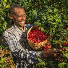 Pek Çok İnsana Göre Dünyadaki En Lezzetli Kahve Çeşidi: Etiyopya Kahvesi