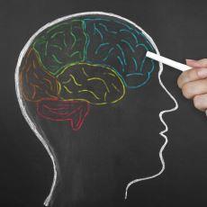 Sinirlendiğimiz Her İnsanı Öldürmememizi Sağlayan Beyin Bölümü: Frontal Lob
