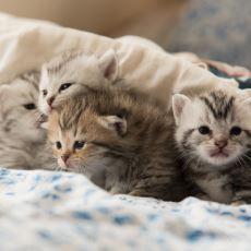 Yavru Kedi Bakımına Dair Bilinmesi Gereken En Önemli Şeyler