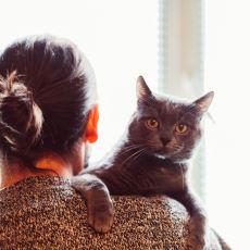 Kedi Sahiplerinin Olası Bir Deprem Anında Çaresiz Kalmamak İçin Alması Gereken Tedbirler